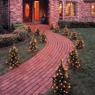 Small Christmas Trees - Wintergreen Corporation